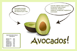 Illustrator Infographic Assignment - Avocados