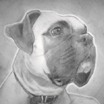 Pencil Portrait of a Dog (Breed:Boxer)